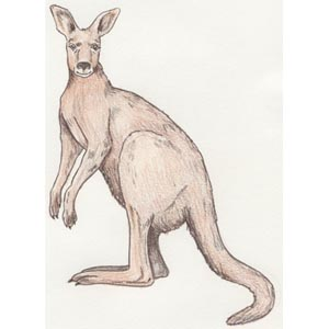 Jeepers the Kangaroo